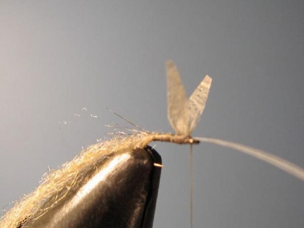 p 234 che 224 la mouche